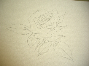 Rose Drawing on Watercolor paper
