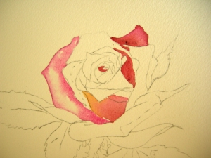 Beginning strokes on Rose painting