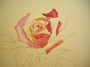 Rose Petals in Watercolor