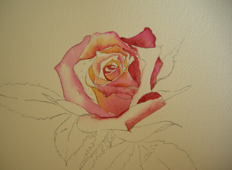 How to paint a rose in watercolor debbie waldorf johnson for How to paint a rose in watercolour