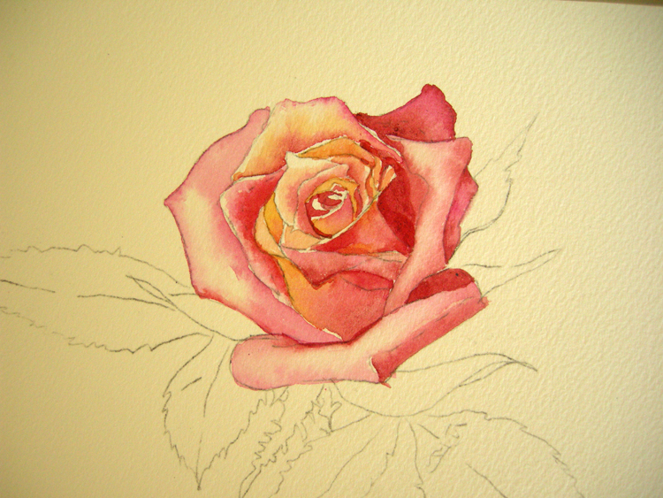 How to paint a rose step no 2 debbie waldorf johnson for How to paint a rose in watercolor step by step