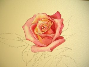 Nearly Finish Rose Petals