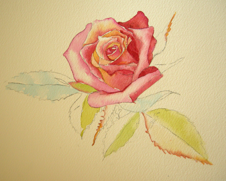 How to paint a rose in watercolor archives debbie for How to paint a rose in watercolor step by step