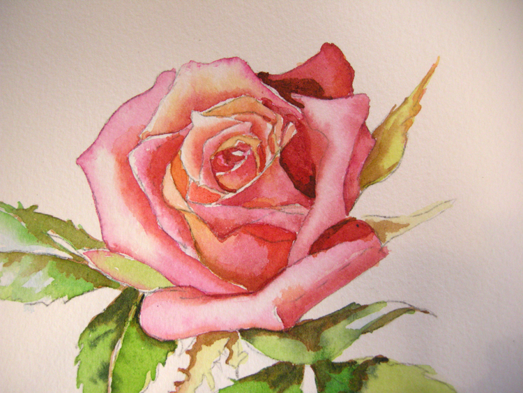 Flowers in watercolor archives debbie waldorf johnson for How to paint a rose watercolor