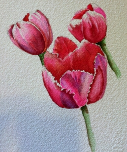 Tulip-demo01